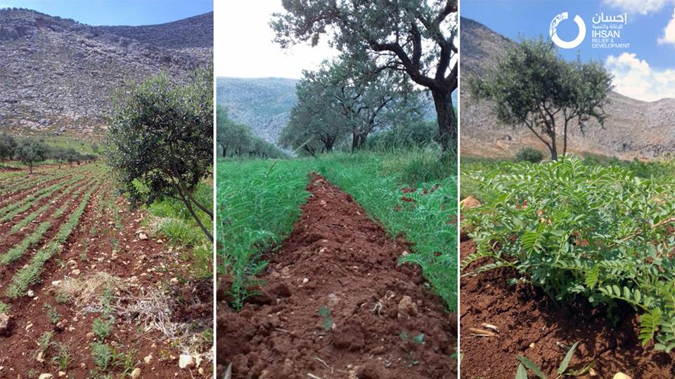 IhsanRD is implementing an agricultural Development Project in Idlib Governorate.